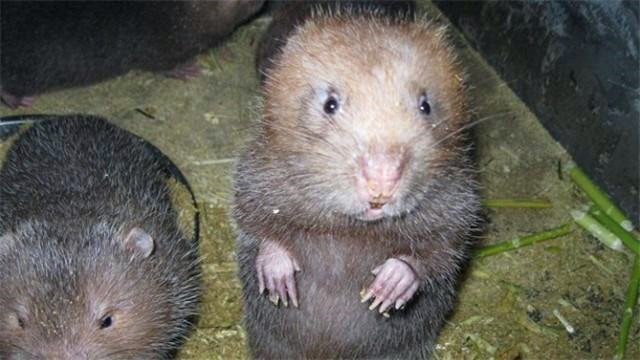 养殖竹鼠赚钱
